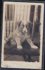 Antique Vintage RPPC Postcard Adorable Puppy Sitting in Chair