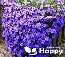 ROCK CRESS CASCADE BLUE - 300 SEEDS - Aubrieta cultorum hybrida - ROCKERY FLOWER