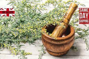 Wormwood (Artemisia Absinthium) 500 Seeds. Absinthe Same Day Dispatch