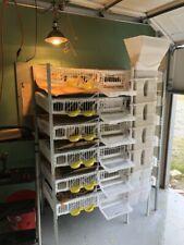 Quail Breeding Cage, Quail Eggs, Modular System, Automatic feeder, waterer