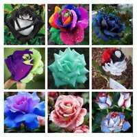 200pcs Mixed Style Rare Plants Decor Multi-Colors Rose Peony Flower Seeds Decor