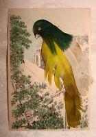 BIRD WITH FEATHERS On Perch  Vintage Postcard Carte Postale Unused