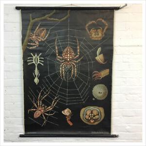 Industrial Vintage Jung Koch Quentell Chart - Spider