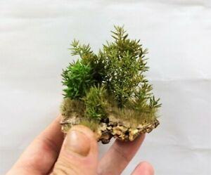 Zubehör Diorama Vegetation für Diorama, Kunststoff Eisenbahn oder Krippe