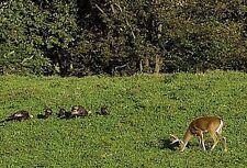 2 lbs Deer,Turkey and Wildlife Food Plot seed Mix Contains 10 Varieties of Seeds