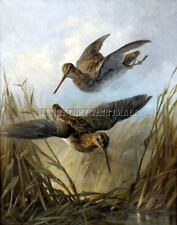 ANTIQUE HUNTING REPRO 8X10 PHOTOGRAPH PRINT PAIR OF FLYING SNIPE