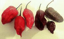 Chili Mix Bhut Jolokia + Habanero 40 Samen einige der schärfsten Chilis der Welt