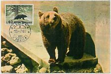 MAXIMUM CARD - POSTAL HISTORY - Italy : Bears, Wild Fauna, 1967