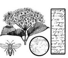 ARTEMIO Mini Clear Stamp Set - HYDRANGEA - nature flowers vintage garden planner