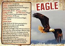 Eagle, Bird of Prey, United States & Canada, Water - Animal Information Postcard