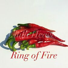 Chilli Seeds - Ring O Fire x 25