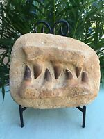 Mosasaur Teeth Fossil Specimen In Matrix Mosasaur Jaw Bone Dinosaur Era Morocco.