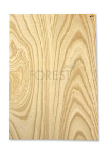 Electric guitar body blank American swamp ash, 2 glued pieces stock 464