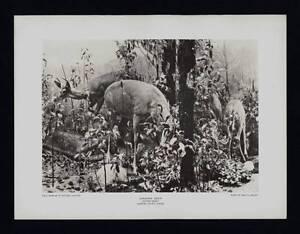 PHOTOGRAVURE CARL E. AKELEY VIRGINIA DEER AUTUMN GROUP TAXIDERMY SCULPTURE