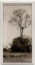 Tree Growing From Termite White Ant Hill Rhodesia Africa 1930s Trade Ad Card