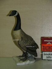 +# A010082_02 Goebel Archiv Muster Gans Canada Goose Kanadagans 38-523 Plombe