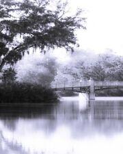 8x10 Fine Art Print Digital Photography Black and White Palmetto Bluff Bridge