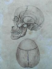 Original Anatomy Scull Drawing Antique Art Vintage Look Illustration Human