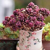 1*60pcs Succulents Rare Mini Potted Flower Seeds Home Office Decoratives 18# H