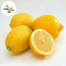 10x Lemon tree Tree Outdoor Fruit Seeds Heirloom Garden Indoor Rare Organic Seed
