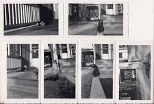 Black & White & Calico Outdoor Cats By House Carport Vintage Car 1950s 6 Photos