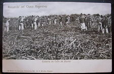 ARGENTINA 1900s Sugar Cane Workers in Field.