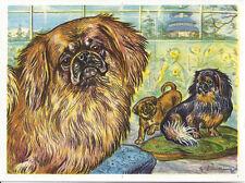RARE 1952 Dog Art Print Austria Tobacco Company Bildwerk Card PEKINGESE Hapa Dog