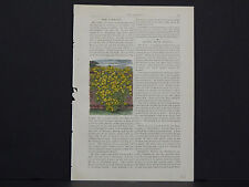 James Vick Seed Catalog Rocheter, N.Y. Flowers/ Vegetables, Hand Colored s#03