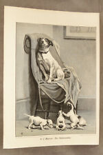 "Vintage Print Jack Russell Terrier Dog And Puppies Measures 11"" By 15"""