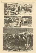 Toronto, Canada, Short Horn Cattle Sale, Auction, Vintage, 1876 Antique Print.