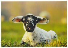 Postcard: niedliches buntes Lamm - sweet lamb - agneau