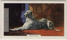 Scottish Deerhound Dog Canine Pet 1930s Ad Trade Card