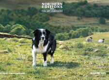 More details for steven townsend ben's valley border collies bens dogs