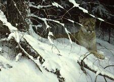 Cougar in the Snow  - Robert Bateman - Signed & Numbered Ltd Ed Print