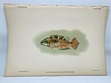 Antique Lithographic Print Reef Fishes Hawaiian Islands Bien 1903 Plate 38