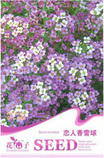 Original Package 50 Lover's Fragrant Snowball Lobularia Maritima Seeds A170