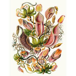 Nature Biology Sea Plant Haeckel Ernst Germany Vintage Advert Canvas Print