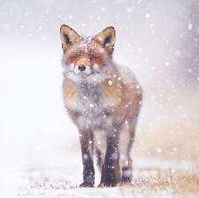 Red Fox en la nieve Tarjetas de Navidad-paquete de 10-tumor cerebral investigación