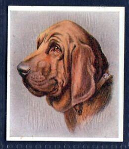 BLOODHOUND - Original 1930's Illustrated Cigarette Card