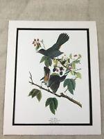 1964 Stampa Gatto Uccello Audubon's Libro Di Uccelli Di America Grande Folio