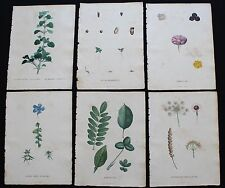 1805 - GROUP OF 6 REDOUTE Color Stipple engravings finished by hand