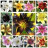 50Pc Lily Flowers Seeds Lilium Rare Lilies 20 Kinds Perennial Garden Home Plants