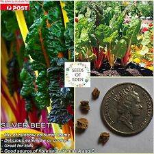 "20 SILVERBEET ""RAINBOW CHARD"" SEEDS(Beta vulgaris);Great flavour;colourful stems"