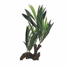 Fluval Willow Leaf Hygrophila Aquarium Plant On Root 30cm