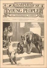 Irish Wolfhound befriends Lost Dog, Pug, King Charles Spaniel, antique 1881