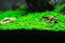 Grass Aquarium Mixed Fish Tank Plants Big Bloom Home Garden 500 Seeds Combo Pack