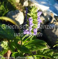 Salvia Hispanica 50 Semi CHIA Cibo degli Aztechi Erbe