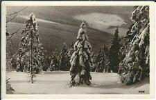 Ansichtskarte Oberwiesenthal - Waldpartie im Winter mit Schnee - schwarz/weiß