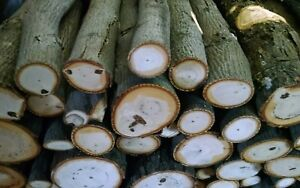 Hickory Wood Logs for BBQ/Grilling/Wood Smoking! Arts and Crafts15lbs-19lbs