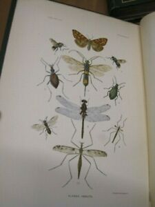 Harriman Alaska Expedition Vol VIII & IX Insects w/ Plates Smithsonian Inst 1910
